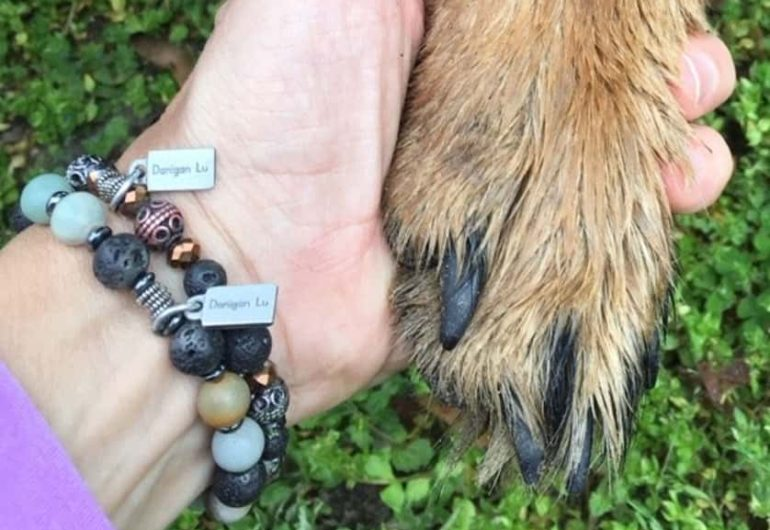 A human hand with a bracelet adorning the wrist holding a canine paw.